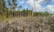 Lào Cai: Khởi tố nhiều đối tượng hủy hoại rừng phòng hộ