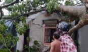 Lốc xoáy càn quét quật đổ cây lớn, thổi bay mái nhà dân