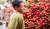 Trái vải xuất khẩu sang Nhật sẽ được giám định trực tuyến