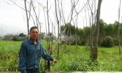 Vòng tròn đá quanh ở huyện Sơn Dương, cách ứng xử lạ lùng