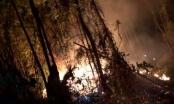 Nắng nóng đỉnh điểm, rừng trồng ở Nghệ An bốc cháy trong đêm