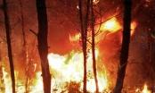 Lửa đỏ rực bao trùm trăm ha rừng, cả ngàn người trắng đêm cứu rừng