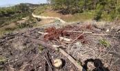 Tỉnh Lâm Đồng yêu cầu xử lý nghiêm vụ phá rừng ở huyện Lâm Hà và Đam Rông