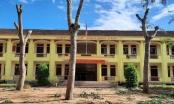 """Nghệ An: Nhiều cây xà cừ tuổi đời hàng chục năm trong sân trường bị """"tỉa"""" trụi, học sinh tiếc nuối"""