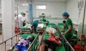 Nghệ An: Bị tổ ong ở trường tấn công, 16 học sinh nhập viện