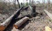 Lâm Đồng: 3 cá nhân bị phạt hàng trăm triệu đồng vì phá rừng