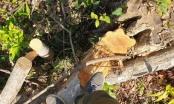 Tăng cường xử lý tình trạng phá rừng, lấn chiếm rừng