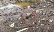 Lào Cai: Phát hiện thi thể người đàn ông không mặc áo nổi trên mặt nước