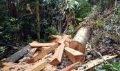 Kon Tum: Giám đốc Lâm trường Măng La bị sa thải vì để mất rừng