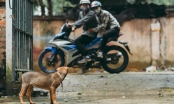 Tuyên Quang: Xuất hiện đối tượng dùng viên dạng kẹo mút để đánh bả chó