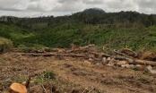 Chuyển đổi mục đích sử dụng đất rừng trái quy định, doanh nghiệp bị phạt hơn 250 triệu đồng