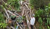 Hà Giang: La liệt gỗ tự nhiên bị tàn phá để trục lợi