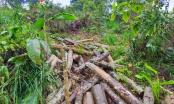 Hà Giang: Chuyển hồ sơ vụ khai thác rừng trái phép ở Khuổi Le sang cơ quan công an xử lý