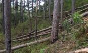 Phó Thủ tướng Trương Hòa Bình yêu cầu làm rõ vụ phá rừng ở Lâm Đồng