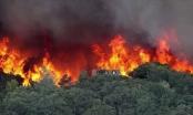 Quảng Ninh: Dập tắt cháy rừng tại thị xã Đông Triều
