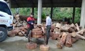 """Bỏ lại 131 thớt nghiến, """"lâm tặc"""" bỏ trốn lên rừng tại Tuyên Quang"""
