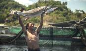 Thị trường cá Tầm cạnh tranh không lành mạnh, Phó Thủ tướng chỉ đạo làm rõ