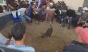 Đắk Lắk: Triệt phá trường gà núp bóng cá độ bằng bia và thuốc lá