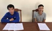 Lâm Đồng: Khởi tố 2 kẻ chủ mưu trong vụ khai thác gỗ rừng trái phép