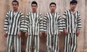 Gia Lai: Bắt giam nhóm đối tượng khai thác gỗ rừng trái phép