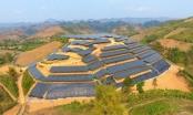 Báo động làm điện mặt trời dưới vỏ bọc trang trại