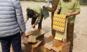 Thu giữ 2.968 gói dầu gội giả nhãn hiệu Clear, Sunsilk và Dove