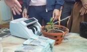 Bất ngờ với thương vụ giao dịch lan đột biến tiền tỷ ở một xã nghèo tại Nghệ An