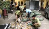Lạng Sơn: Bắt giữ, tiêu hủy hàng nghìn chân gà nhập lậu