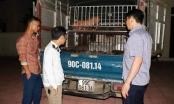 Hà Tĩnh: Tiêu hủy 50 con lợn nhiễm bênh trên đường đưa ra Hà Nam tiêu thụ