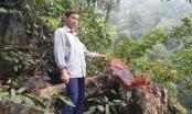 Tuyên Quang: Hai đối tượng khai thác gỗ nghiến trái phép