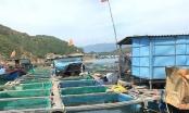 Hãm hiếp, hành hung 2 mẹ con trên bè cá giữa biển: Hành vi có tính chất côn đồ
