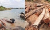 Gia Lai: Tiếp tục điều tra vụ hàng trăm cây gỗ lậu bị đốt, tẩu tán dưới lòng hồ Sê San 4
