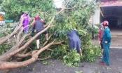 Giông lốc khiến nhiều cây cối, nhà cửa ở Nghệ An đổ sập