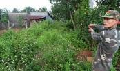 Đắk Nông: Khởi tố đối tượng thuê xe tải đi trộm bò