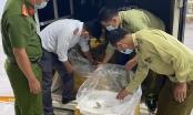 Chưa tìm thấy chủ sở hữu 300 kg tôm chứa tạp chất tại Kiên Giang
