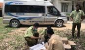 Gia Lai: Phát hiện xe khách vận chuyển 350 bao thuốc lá lậu và cá thả động vật rừng