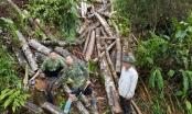 UBND tỉnh Hà Giang yêu cầu làm rõvề thực trạng phá rừng tự nhiên từ phản ánh của Pháp luật Plus