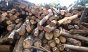 Đề nghị cách chức Trạm Trưởng Kiểm lâm sau phản ánh của Pháp luật Plus về nạn phá rừng ở Hà Giang