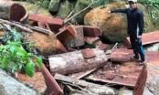 Lâm Đồng: Khai thác gỗ rừng trái phép, nhóm người bị phạt 270 triệu đồng