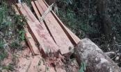 Đắk Lắk: Khởi tố vụ phá rừng tự nhiên quy mô lớn tại huyện Ea Hleo