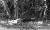 Sơn La: Phát hiện thi thể người đàn ông có dấu hiệu bị thiêu cháy