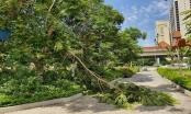 Hà Nội: Gần 2.000 tỷ đồng duy trì cây xanh, thảm cỏ vẫn nhếch nhác khó tin