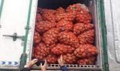 Bắt giữ xe container chở 29 tấn khoai tây Trung Quốc vào Đà Lạt tiêu thụ