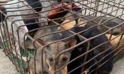 Nghệ An: Bắt giữ cẩu tặc chở 5 con chó trên đường đi tiêu thụ