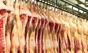 Nhập khẩu thịt lợn dự báo vẫn tăng