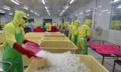 Tầm nhìn chiến lược ngành thuỷ hải sản và nông nghiệp xuất khẩu của Cà Mau