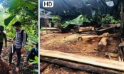 Đắk Lắk: Phát hiện một 1 hộ dân tàng trữ lâm sản trái phép