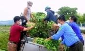 Nghệ An: Chung tay giải cứu rau xanh cho nhân dân vùng dịch