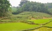 Có hay không dấu hiệu giả mạo hồ sơ giao đất rừng và đất lâm nghiệp tại Hà Hòa, Phú Thọ