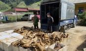Bắt giữ 1 tấn thịt động vật bốc mùi hôi thối đang đi tiêu thụ